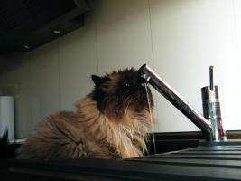 Foto 2 Kiki's mobile Katzen- und Kleintierbetreuung