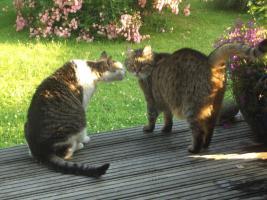 Foto 3 Kiki's mobile Katzen- und Kleintierbetreuung