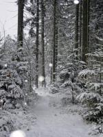 Foto 19 Kinder und Haustier freundlicher Ferienpark - Bayerischer Wald - Luftkurort Falkenstein
