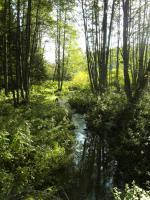 Foto 21 Kinder und Haustier freundlicher Ferienpark - Luftkurort Falkenstein - Bayerischer Wald
