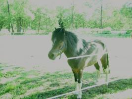 Kinderliebes Pony zuverkaufen