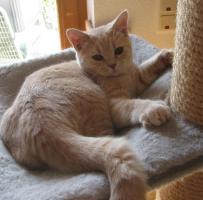 Foto 3 Kitten