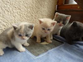 Foto 4 Kitten
