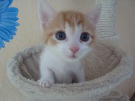 Foto 5 Kitten gegen 75 Euro Schutzgebühr