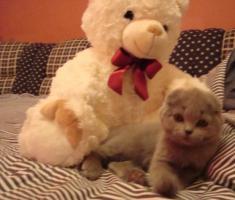 Kittin, Katzenbabys