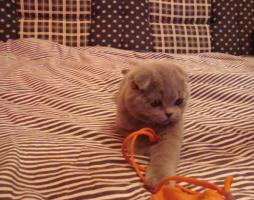 Foto 3 Kittin, Katzenbabys