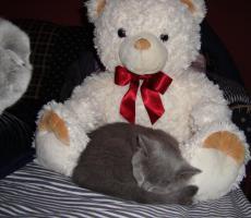 Foto 4 Kittin, Katzenbabys