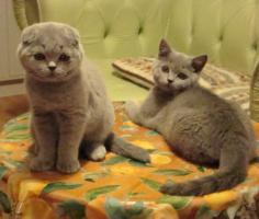 Foto 6 Kittin, Katzenbabys