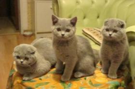 Foto 7 Kittin, Katzenbabys