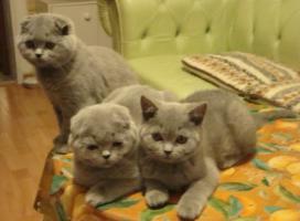 Foto 8 Kittin, Katzenbabys
