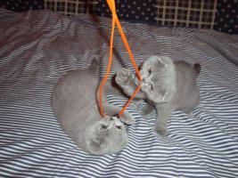 Foto 10 Kittin, Katzenbabys