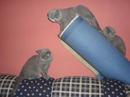 Foto 11 Kittin, Katzenbabys