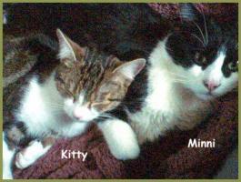 Kitty und Minnie, 2 Katzenmädels