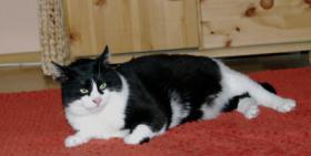 Foto 2 Kitty und Minnie, 2 Katzenmädels