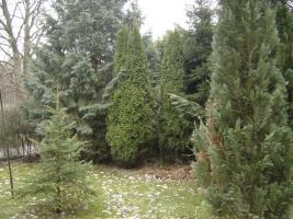 Foto 2 Klein-Garten in Gaarden-Süd
