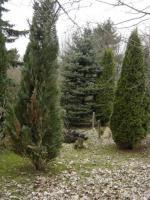 Foto 6 Klein-Garten in Gaarden-Süd