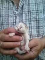 Foto 3 Kleine Babykatzen zu verkaufen !!!