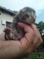 Foto 4 Kleine Babykatzen zu verkaufen !!!