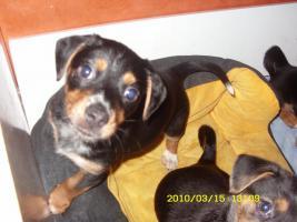 Foto 2 Kleine Hundebabys!!!