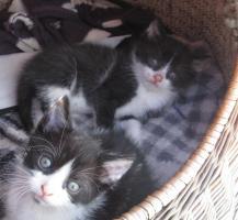 Foto 2 Kleine Kätzchen