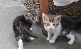 Foto 3 Kleine Kätzchen