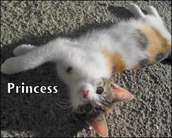Kleine Kätzchen suchen ein neues Zuhause!