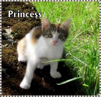 Foto 3 Kleine Kätzchen suchen ein neues Zuhause!