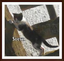 Foto 4 Kleine Kätzchen suchen ein neues Zuhause!