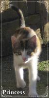 Foto 5 Kleine Kätzchen suchen ein neues Zuhause!
