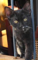 Kleine Katzen aus Andalusien suchen neues Zuhause