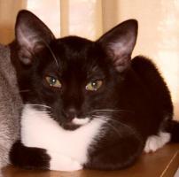 Foto 2 Kleine Katzen aus Andalusien suchen neues Zuhause