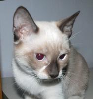 Foto 3 Kleine Katzen aus Andalusien suchen neues Zuhause