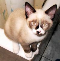 Foto 4 Kleine Katzen aus Andalusien suchen neues Zuhause