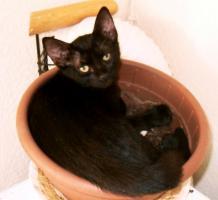 Foto 5 Kleine Katzen aus Andalusien suchen neues Zuhause