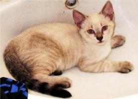 Foto 6 Kleine Katzen aus Andalusien suchen neues Zuhause