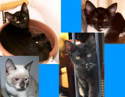 Kleine Katzen aus Andalusien suchen neues, liebevolles Zuhause