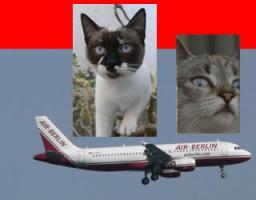 Foto 2 Kleine Katzen aus Andalusien suchen neues, liebevolles Zuhause