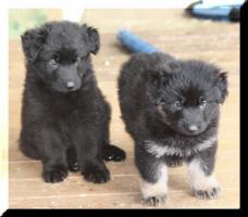 Foto 2 Kleine Knuddelbären abzugeben !!