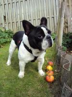 Foto 4 Kleine, berufstätige Familie mit Hund sucht neues Zuhause!
