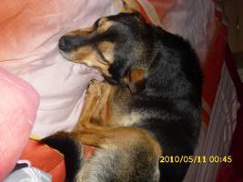 Foto 6 Kleine, liebe R�de sucht dringend liebevolle Familie