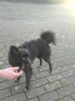 Foto 2 Kleinen Mischling hund