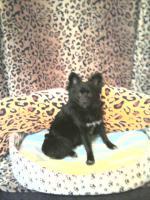 Foto 3 Kleinen Mischling hund