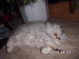 Foto 3 Kleiner Schmusetiger sucht neues Zuhause