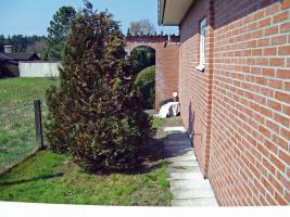 Foto 8 Kleines renoviertes gepflegtes Einfamilienhaus / monatl. Belastung ca. 169, - EURO