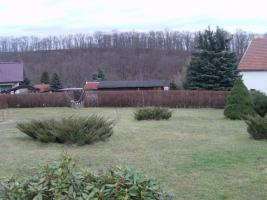 Foto 3 Kleingarten