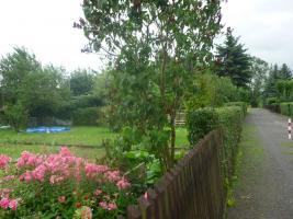 Kleingarten in Altenhain zwischen Naunhof und Grimma / Sachsen zu verpachten