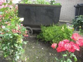 Kleingarten in Kassel Umfeld ab sofort gesucht