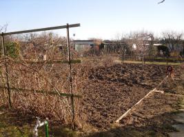 Foto 4 Kleingarten in Rostock - Brinckmansdorf für wenig Geld abzugeben