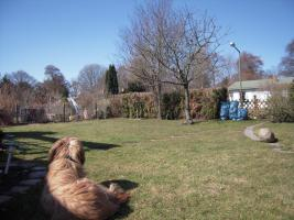 Foto 10 Kleingarten abzugeben