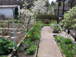 Foto 4 Kleingarten preiswert abzugeben